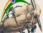 आईना द्वारा एलआईयू की बंदिशों से कलमकारों को आज़ाद कराने का संकल्प (स्वतंत्रता दिवस स्पेशल)
